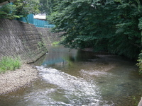 柳瀬川の清流