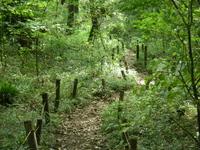 林の中の道