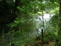 柳瀬川の淵