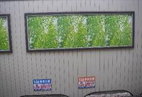 新緑の広告
