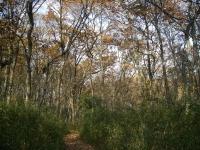 写真:八国山緑地の雑木林