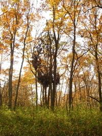 写真:八国山緑地の折れた木