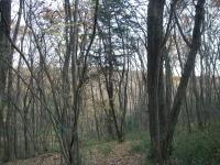 写真:冬の雑木林は空が見える