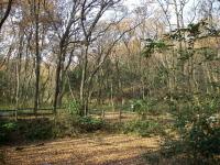 写真:八国山緑地の池