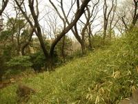 箱根山山腹からの眺め