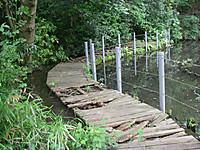 池の脇には木道があるが、朽ちていて通れない。