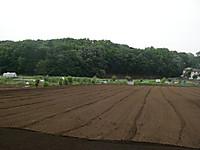 開発をまぬがれた畑と雑木林
