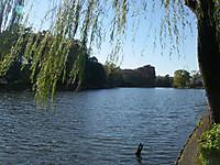 街中のボート池には見えない石神井池