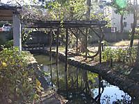 藤棚と水路