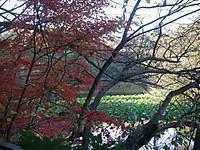 紅葉の先に沼沢植物群落