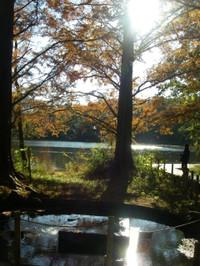 手前に泉、池の北側で高くそびえる樹木