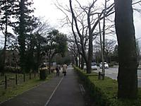 車道との間に植え込みと並木のある歩道