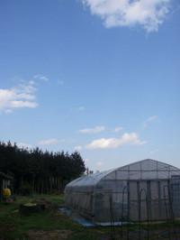 正面にビニールハウス、その後ろには林。そして青い空