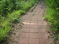 レンガを敷き詰めた探鳥路。隙間から草がはえている