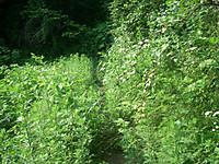 草で塞がれかかった探鳥路