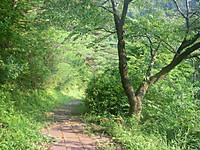 斜面に木で土留めを設けた探鳥路の階段