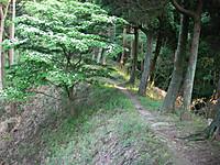谷の奥へと続く尾根道は狭く両側は樹木