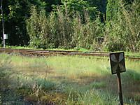 大原寄り、いすみ鉄道の線路から側線が分岐している