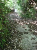 セメントで固めてはあるが、落ち葉の積もった急な坂道。
