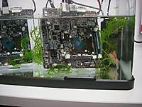 水槽の中には水草と金魚