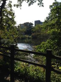 展望台へ降りる途中で柵越しに柿田川を見る。
