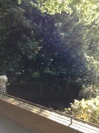 木々に囲まれた直径10メートルほどの池を展望台から覗き込む観光客