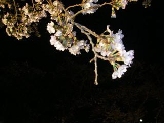 枝先の花と蕾のアップ