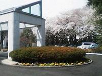 ハンセン病資料館と桜並木