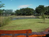 金山緑地公園の池