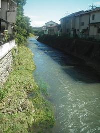 増水した柳瀬川