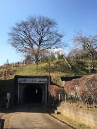 樹の生えた小山の麓に開いたトンネルの口