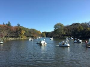 池に浮かぶ白鳥型ボート