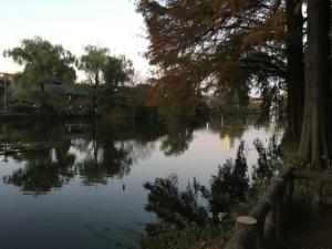 林間に池が見える
