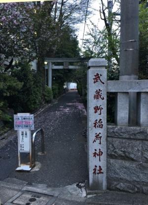 武蔵野稲荷神社と彫られた石柱の奥に続く樹木が茂る参道
